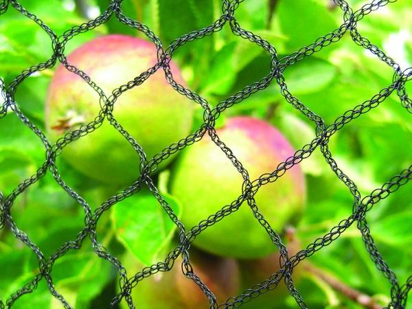 Anti Bird Netting With Three Types In Agriculture Using