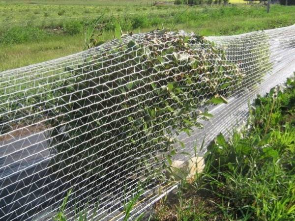Plastic Netting As Agriculture Net In Greenhouse And Nurseries